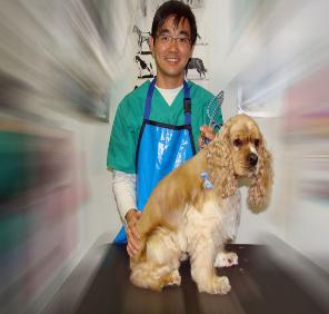 Dog Lovers Central Pet Grooming In Los Angeles Dog Groomers Los